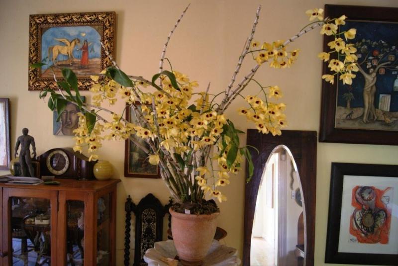 Andre's Kusamono Orchid10