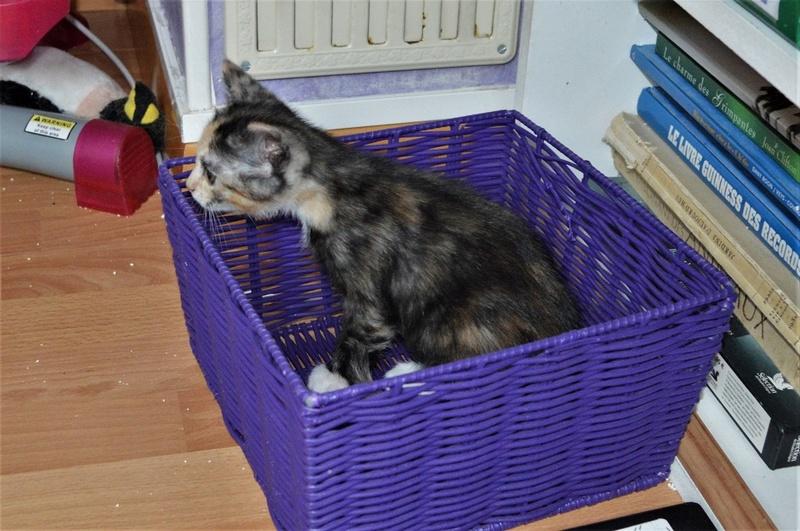 naella - NAËLLA, chatonne née vers le 15/04/17 Dsc_0014