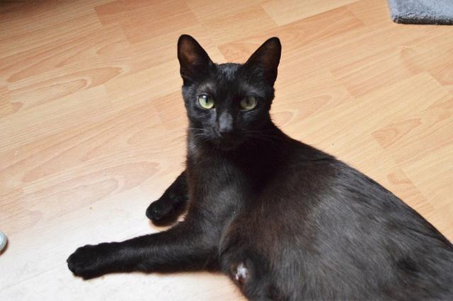 LYNN, chatte noire née en 2015 Dsc_0095