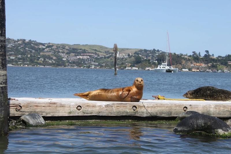 Les Houseboats à Sausalito en Californie aux États-Unis. 95040910