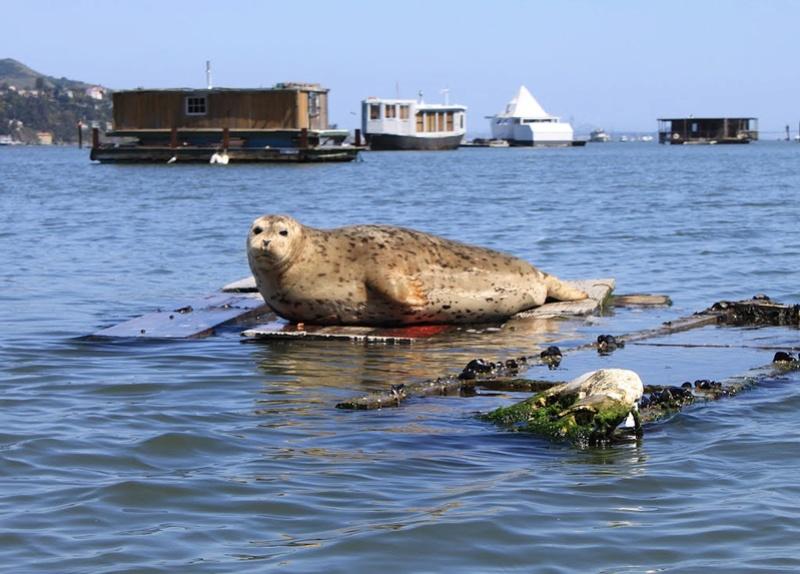 Les Houseboats à Sausalito en Californie aux États-Unis. 95041010