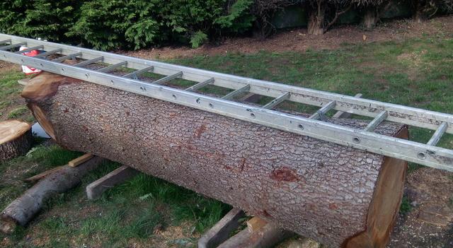 Débit d'un tronc de cèdre à la tronçonneuse 02eche10