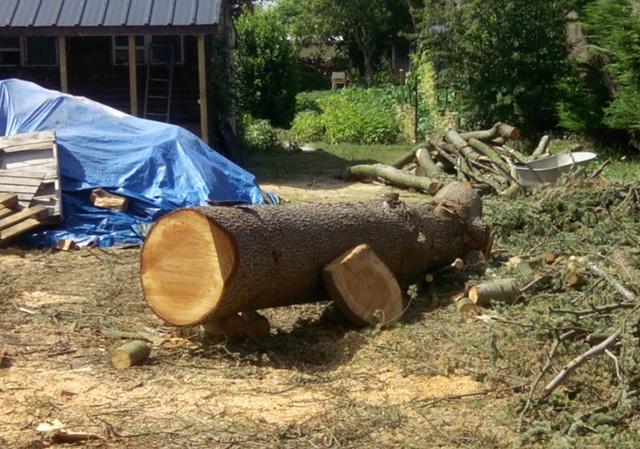 Débit d'un tronc de cèdre à la tronçonneuse Img_2010