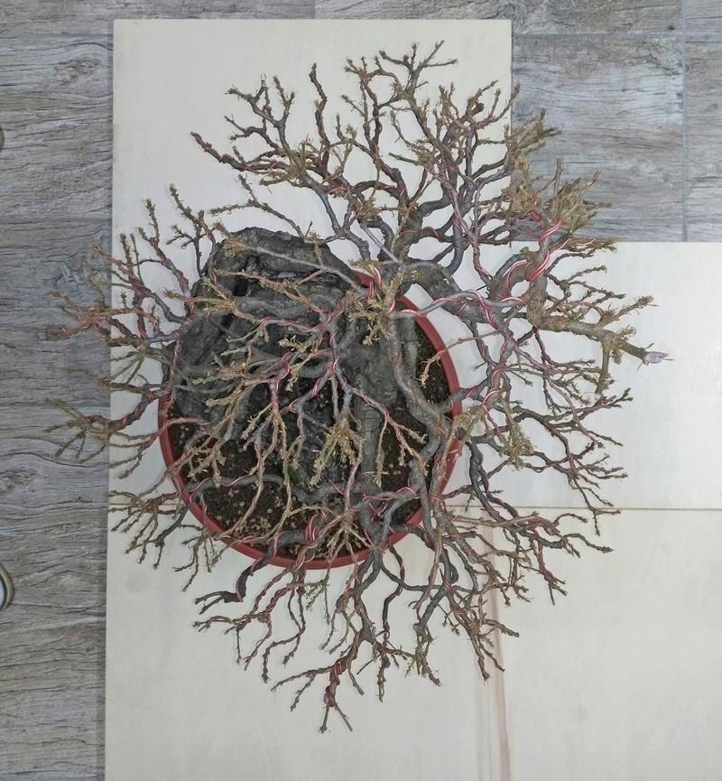Quercus cerris - Pagina 8 Alto_010