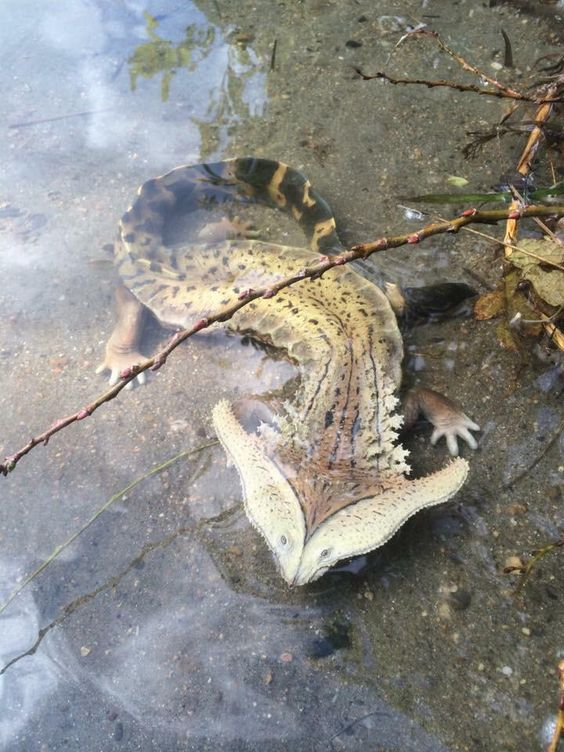 Salamanders are amazing 09f06e10