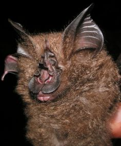 Spectacular bats 09feb510