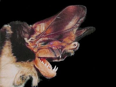 Spectacular bats 0dc9c110