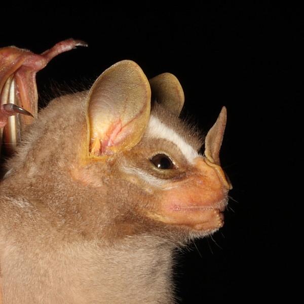 Spectacular bats 1ds32110