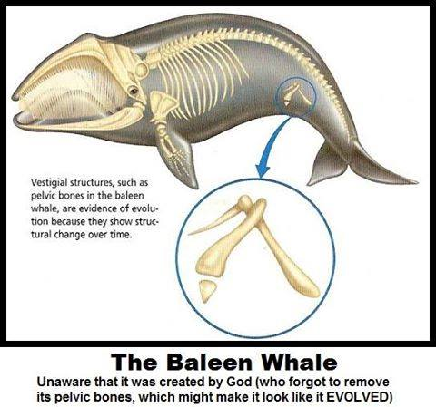 Evolution of whales 22195310