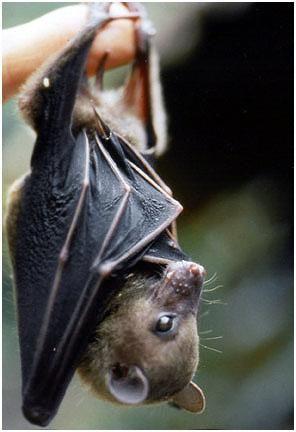 Spectacular bats 26f53710