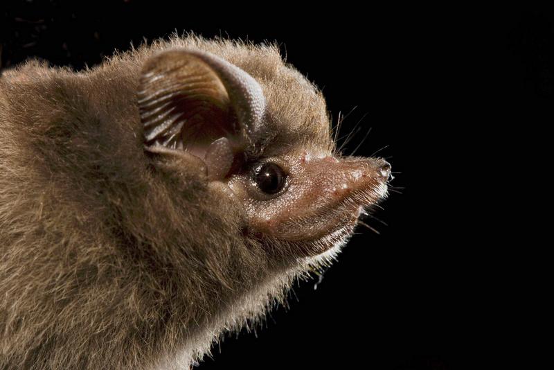 Spectacular bats 2b1d8010