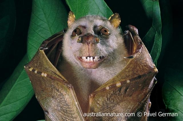 Spectacular bats 32d6ad10