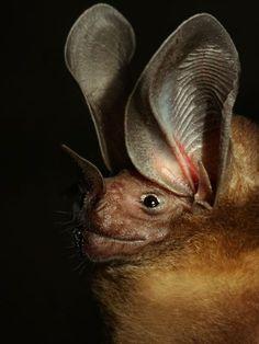 Spectacular bats 349aaa10