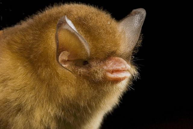 Spectacular bats 41eeda10