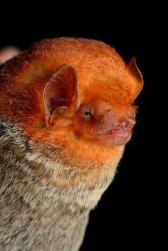 Spectacular bats 4ade0410