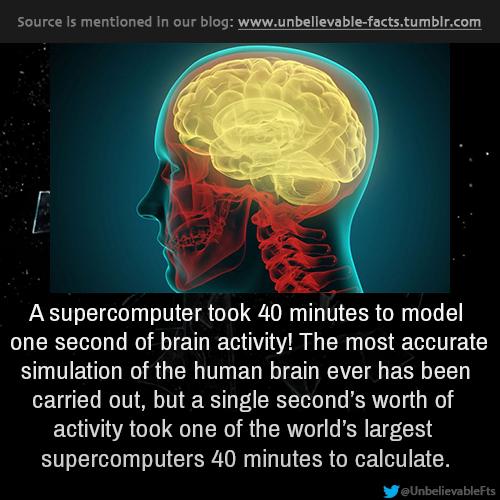 Evolution of the brain 53e33810