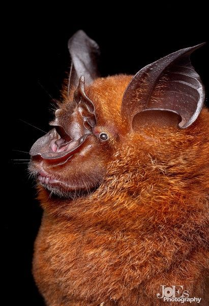 Spectacular bats 5bb7e010