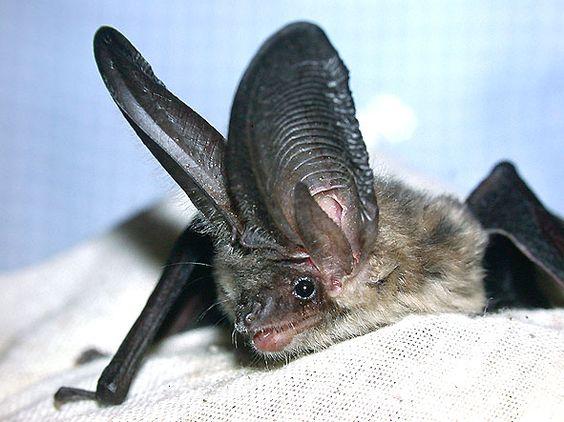 Spectacular bats 5cb4d110