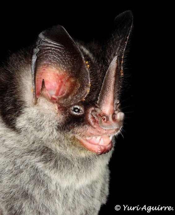 Spectacular bats 5e306b10