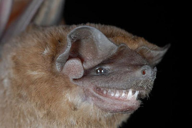 Spectacular bats 6c6b6610