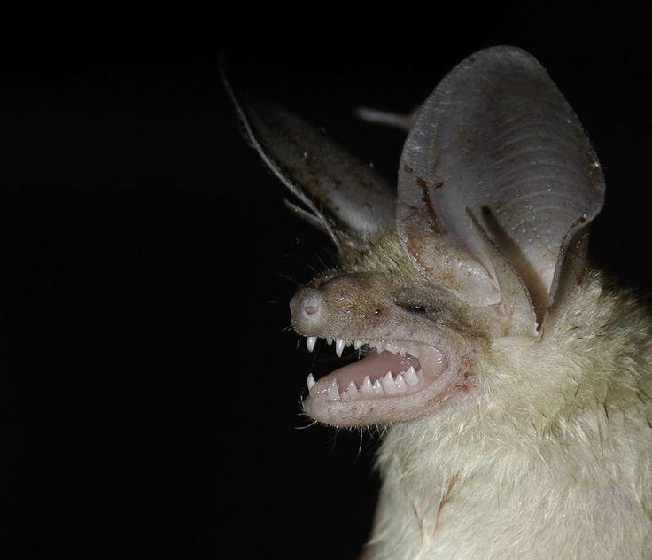 Spectacular bats 7a570f10