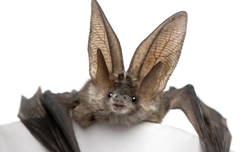 Spectacular bats 7f334210