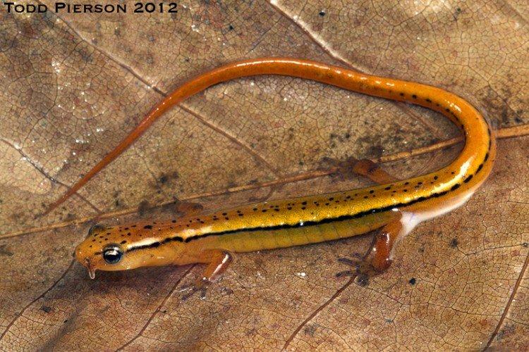 Salamanders are amazing 81626010