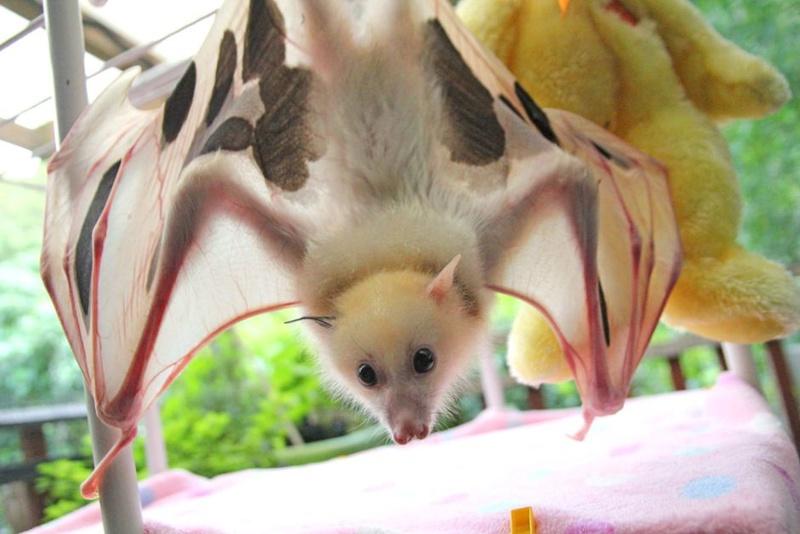 Spectacular bats 81719010