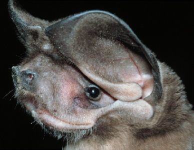 Spectacular bats 8ed64210