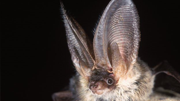 Spectacular bats _6905110