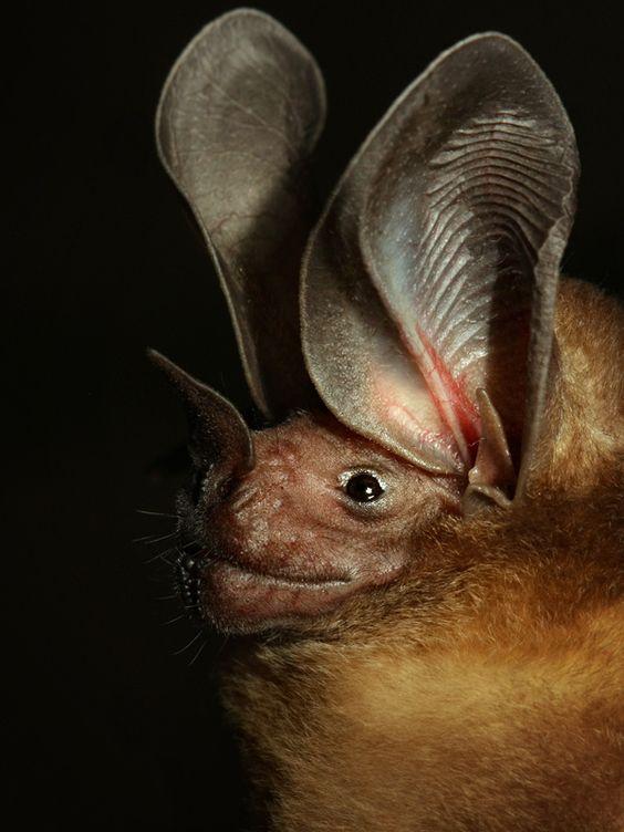 Spectacular bats A47bef10