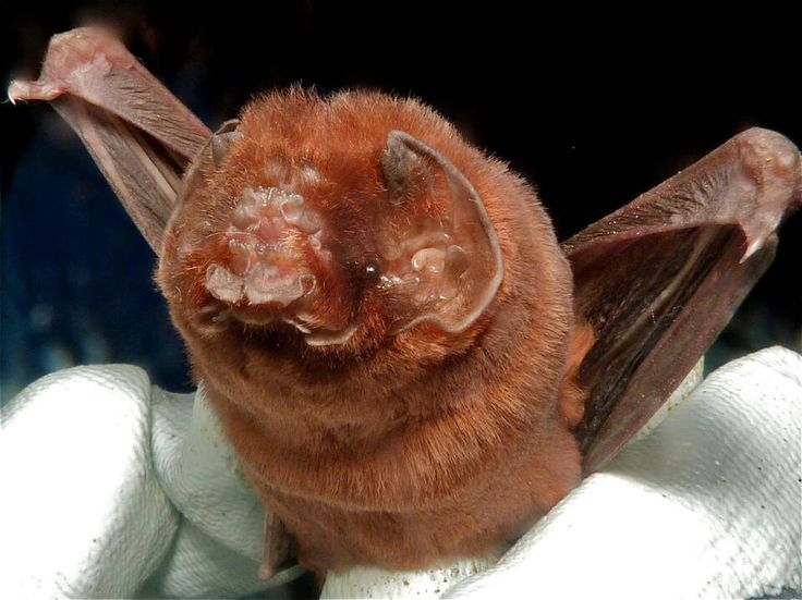 Spectacular bats A7cf8310
