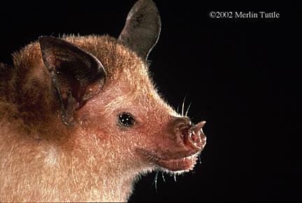 Spectacular bats Aae8b110