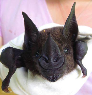 Spectacular bats Ac855910