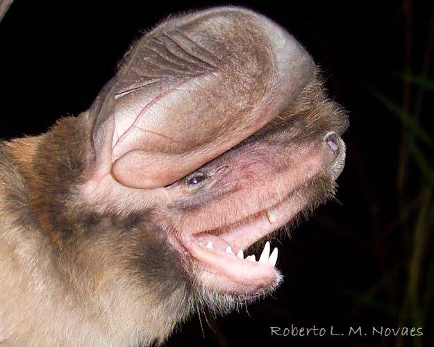 Spectacular bats B54d1a10