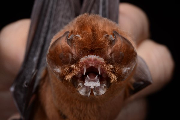 Spectacular bats B8pxca10