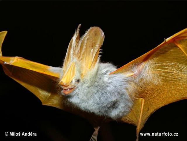 Spectacular bats Bat_10