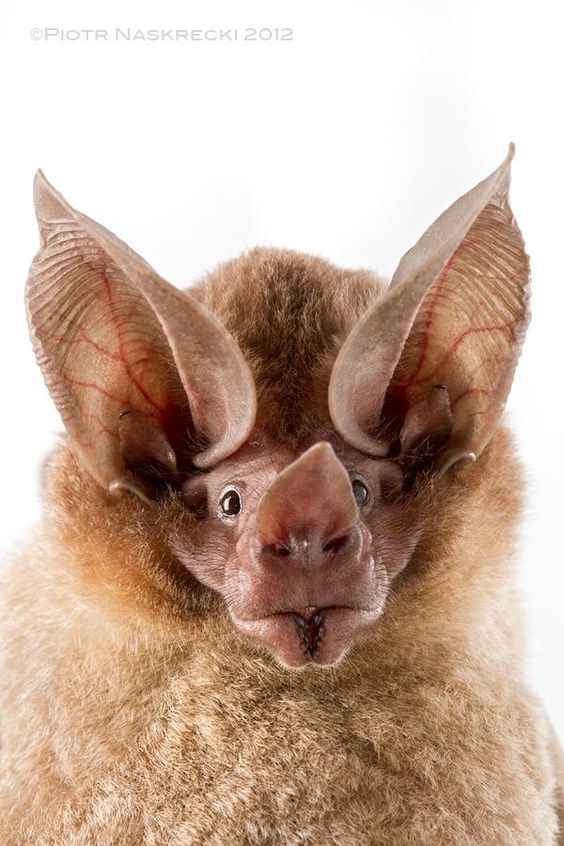 Spectacular bats Bbc36010