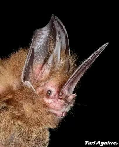 Spectacular bats Bfeb4710