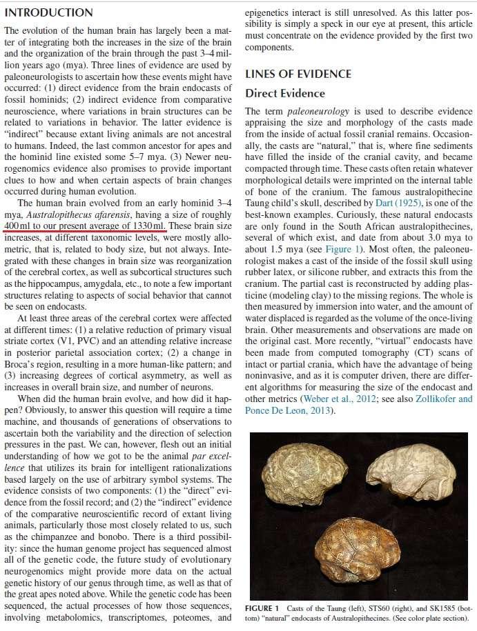 Evolution of the brain Brain_10