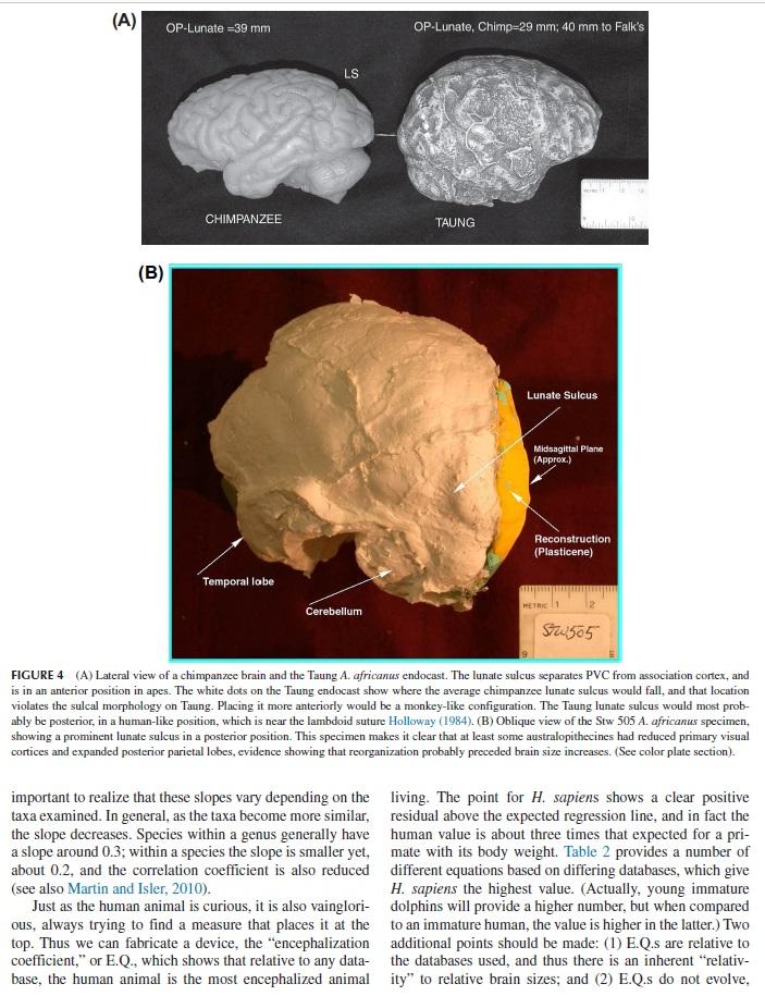 Evolution of the brain Brain_13