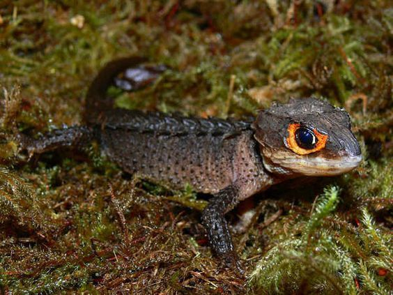 Salamanders are amazing C151a810