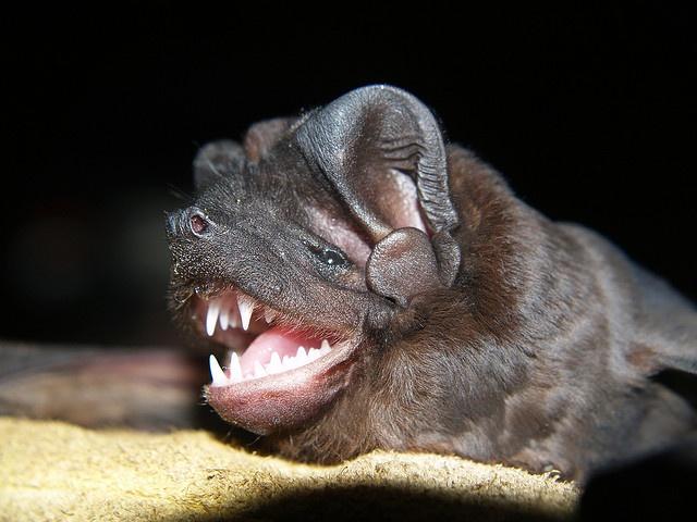 Spectacular bats C6892d10