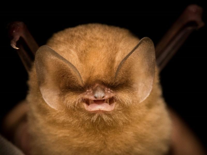 Spectacular bats C810