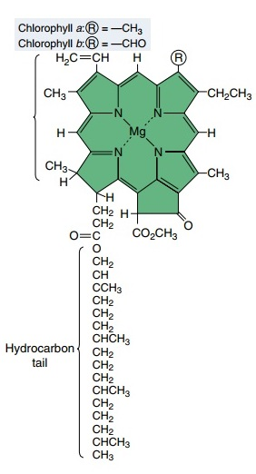 Photosynthesis Chloro17