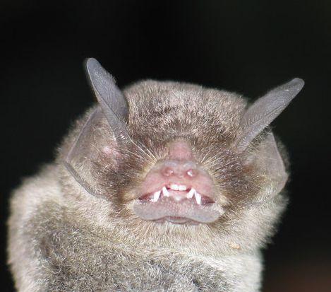 Spectacular bats D7bf8110