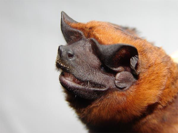 Spectacular bats D8e12911