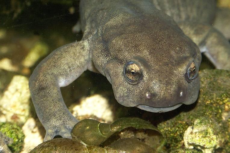 Salamanders are amazing Da349110