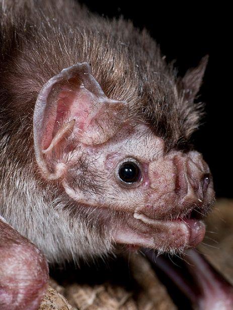 Spectacular bats Ea90af10