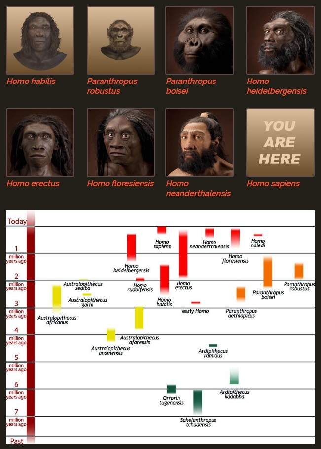 The origin of Homo Sapiens & timeline of human evolution Early_14